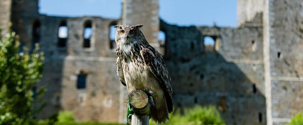 A Yorkshire castle with birds of prey, wild boar and beautiful gardens
